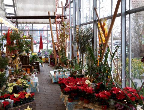 NBB egesa Pflanzencenter Dill
